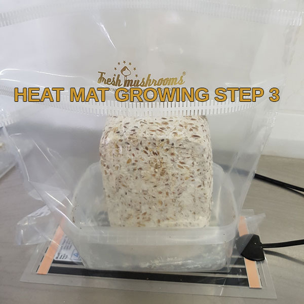 heat mat growguide step 3 freshmushrooms mycelium grow kits