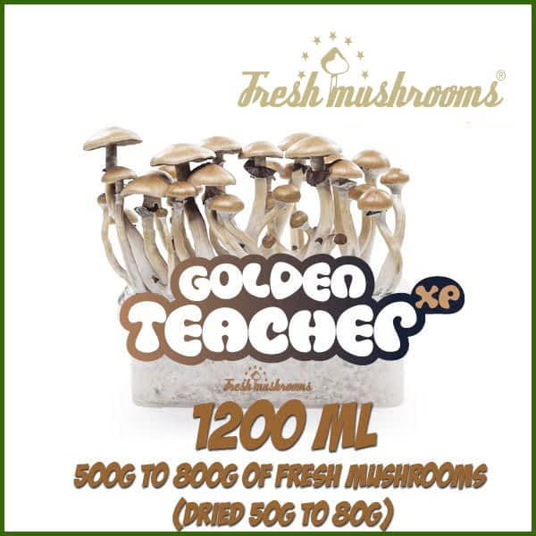 Golden Teacher 1200ml Grow Kit Freshmushrooms