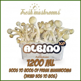 Albino A 1200ml growkit freshmushrooms