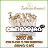 Cambodian 1200ml Grow Kit Freshmushrooms