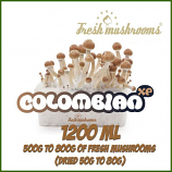 Colombian 1200ml kweekset Freshmushrooms