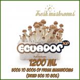 Ecuador 1200ml Grow Kit Freshmushrooms