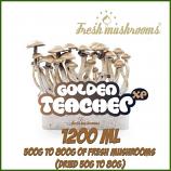 Golden Teacher 1200ml Grow Kit Freshmushrooms