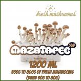 Mazatapec 1200ml Grow Kit Freshmushrooms