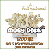 Moby Dick 1200ml Grow Kit Freshmushrooms